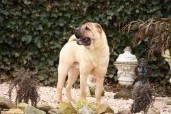 The Shar Pei Archives
